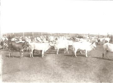 001.126 - Fazenda Guaraúna - 1923