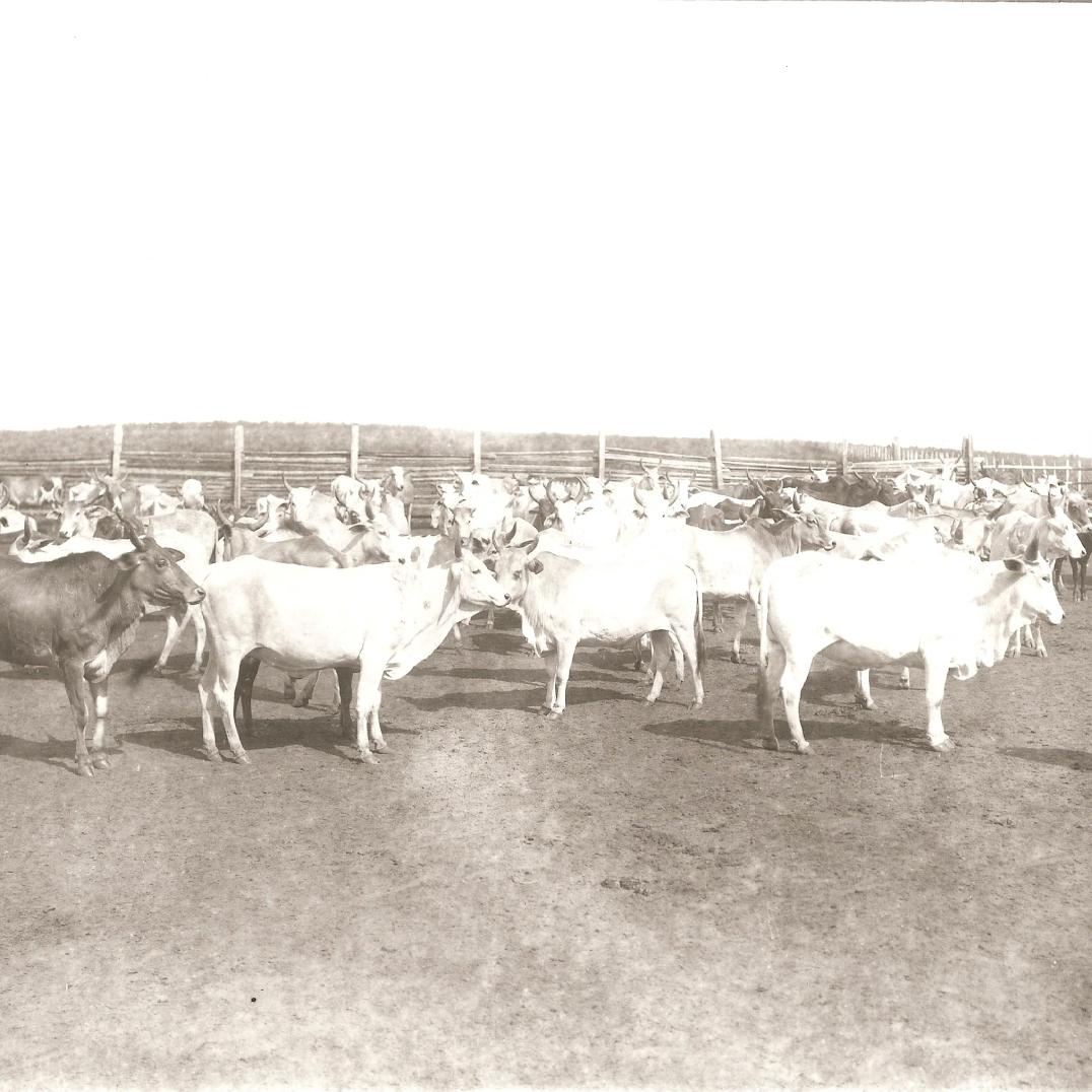 Fazenda Guaraúna - 1923